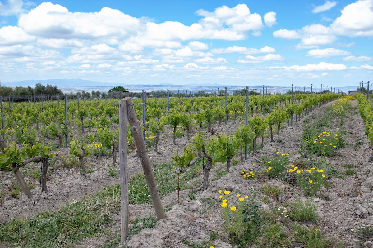 Anima Sardà bed and wine op Sardinië